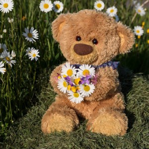 teddy-flower
